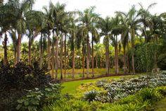 Jardim do Instituto Inhotim.