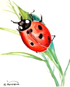 Lady Bug original watercolor painting 10 X 8 in by ORIGINALONLY, $18.00