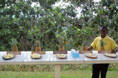 Croydon Plantation  #jamaica