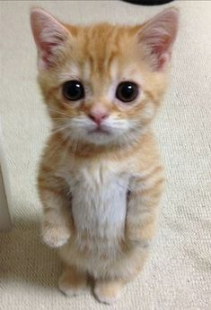 Sad-eyed kitten would like a word with you.