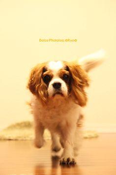 my sweet dog,DOLCE