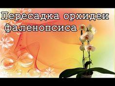 Пересадка орхидеи фаленопсиса! Transplanting Phalaenopsis orchids!