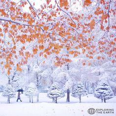 Exploration & Photo by @ericonbu Location / Maruyama Park, Sapporo, Hokkaido, Japan