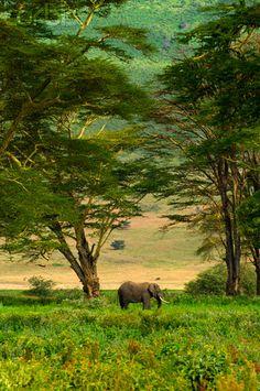 Elefante africano na Cratera de  Ngorongoro, na Área de Conservação de Ngorongoro.  Fotografia: Blaine Harrington.