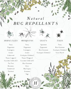 Crafting a Natural Bug Repellent with Essential Oils - Herbal Academy Herbal Magic, Herbal Oil, Healing Herbs, Natural Healing, Natural Life, Holistic Healing, Natural Living, Natural Medicine, Herbal Medicine