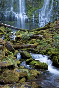 Lower Proxy Falls Oregon - Mark Nobles Photography
