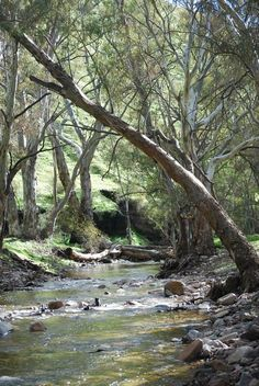 Flinders Ranges ~ South Australia Australia Country, South Australia, Beautiful Landscapes, Beautiful Images, Psalm 1, Country Scenes, Tree Art, Great View, Amazing Nature