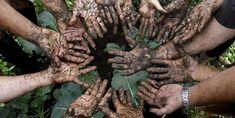 Productos ecológicos para el control de enfermedades y plagas   Retorno a la tierra