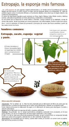 29 Ideas De Esponja Vegetal Esponja Vegetal Esponja Vegetal