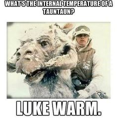 What's the internal temperature of a tauntaun Luke Warm, Get It 'Luke' Warm Star Wars The Empire Strikes Back Movie animals Star Wars Witze, Star Wars Jokes, Star Wars Memes Clean, Clean Memes, Starwars, Geek House, Alec Guinness, Monday Humor, Love Stars
