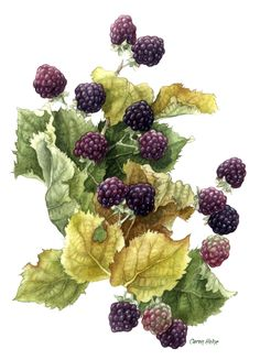 "Last Blackberries, by Caren Heine - We picked these every summer with my Dad...and some day we will again !! Mom will make jam or a delicious cake with berries and whipped cream...""cream tea"" they call it."
