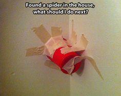 Encyclopedia of Entertainment  How to react when you see a spider