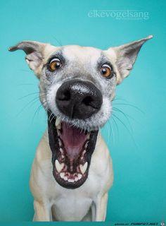 lustiges Bild 'Lustige Hunde-Gesichter 4.jpg'- Eine von 60281 Dateien in der Kategorie 'Lustiges' auf FUNPOT. Kommentar: Lustige Hunde-Gesichter!