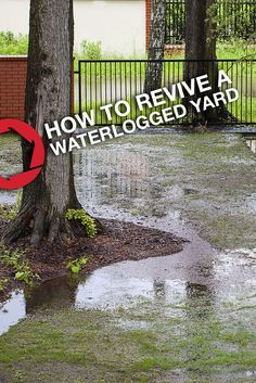 Spring rains making your lawn soggy? Take these steps to revive your waterlogged yard. Backyard Drainage, Landscape Drainage, Rain Garden, Lawn And Garden, Garden Shrubs, Terrace Garden, Outdoor Landscaping, Outdoor Gardens, Landscaping Ideas