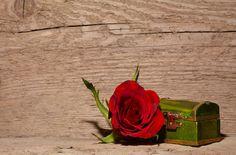 Free Image on Pixabay - Rose, Red, Flower, Blossom, Bloom Red Flowers, Red Roses, Free Pictures, Free Images, Casket, In My Feelings, Bloom, Landscape, Nature