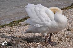 Incontri simpatici sulle rive del Lago di Garda. #LagodiGarda #LakeGarda #GardaLake