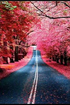 BURGUNDY STREET, MADRID SPAIN | See More in Real WoWz