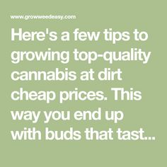 Here's a few tips to growing top-quality cannabis at dirt cheap prices. This way you end up with buds that taste better, smell better, are more potent, and cost less than bud from a dispensary!