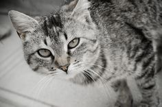 my little kitty captured on Nikon D70