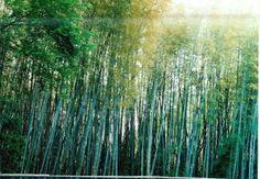 Cap 13: este pin representa el Bosque de Yama.