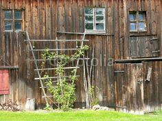 Spalier an einer alten Scheune in Rudersau bei Rottenbuch im Kreis Weilheim in Oberbayern