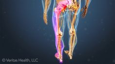 Leg pain and foot pain is often caused by a condition in the lower back. Learn about the various leg pain symptoms and what they may mean.