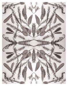 Botanical print gum leaves wattle and banksia photo by sirtom Australian Plants, Mantle Piece, Mirror Effect, Grey Pattern, Vintage Vibes, Rustic Charm, Botanical Prints, Ephemera, Print Patterns