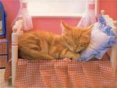 Cat Accessories Archives - Cats In Care Cute Cats And Kittens, I Love Cats, Kittens Cutest, Baby Animals, Funny Animals, Cute Animals, Crazy Cat Lady, Crazy Cats, Kitten Beds