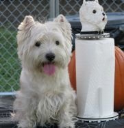 This is the website for the West Highland White Terrier Club of SE Texas.