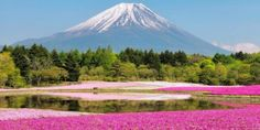 The world is an amazing colourful place, and here are 22 of the most naturally colourful places on earth to prove it. These places are beautiful. Mount Fuji Japan, Valley Of Flowers, Paintings I Love, Amazing Flowers, Most Beautiful, Earth, Tours, Places, Nature