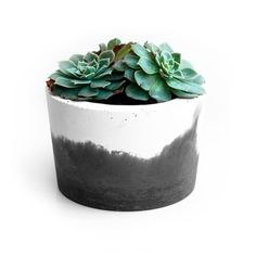 Succulent Plants Concrete Pots | Whitewick Home