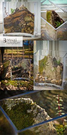 Bonsai Terrarium » Terrariums and wedding centerpieces in Philadelphia PA » page 2