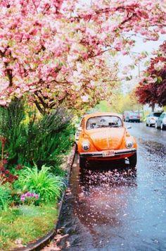 laranja com rosa é sempre lindo...