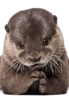 I wants an otter