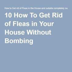 Here Are Effective Tips About How To Kill Fleas In Carpet