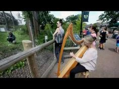 Harpist's Mellow Tone Soothes Apes At Como Zoo In St. Paul ... Harpist Terri Tacheny long enjoyed taking her young daughters to Como Zoo in St. Paul, Minnesota, except for the Primate House, where she thought the gorillas, orangutans and monkeys seemed a little lethargic. Her solution: A little music.