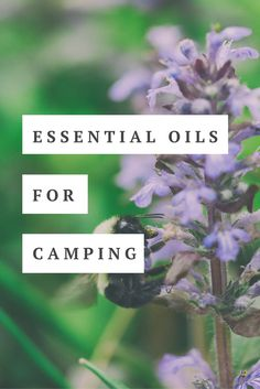 Essential oils for camping trips