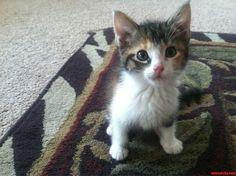 My Little Girl C - http://cutecatshq.com/cats/my-little-girl-c/