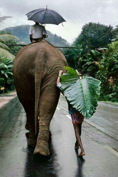 Шри Ланка ... Под дождем ...
