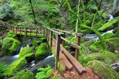 fairfax california hike over mossy wooden footbridge Copyright Lisa Fiedler