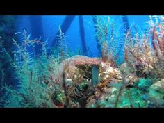 Exploring Resilient Reefs on Oil Platforms in the Gulf of Mexico - Synergen Consulting International Oil Platform, Energy Industry, Oil Rig, Gulf Of Mexico, Platforms, Diving, Exploring, Scuba Diving, Explore