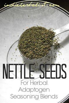 Nettle seeds as an adaptogen and herbal seasoning ingredient // Indie Herbalist Healing Herbs, Medicinal Plants, Natural Healing, Herbal Remedies, Natural Remedies, Herbs For Sleep, Herbs For Health, Wild Edibles, Herbal Medicine