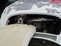 Cachorros no fusca... Encontre o segundo cachorro... Find Lola