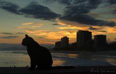 Gato de Praia - Por do Sol da Barra da Tijuca - Rio de Janeiro
