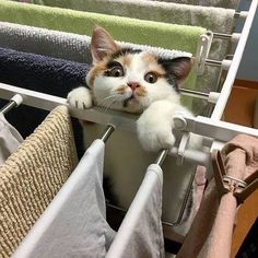 we have compiled funny cats and kittens pictures and seeing them, your mood will be happy. Enjoy these fun and lovely moments together! Animals And Pets, Baby Animals, Funny Animals, Cute Animals, I Love Cats, Crazy Cats, Cool Cats, Gato Animal, Beautiful Cats