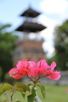 bougainvillea in Bali