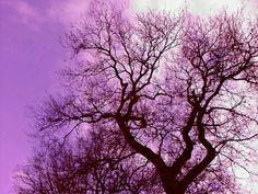 Drentse boom tegen paarse lucht, zwanger van spiritualiteit ;)