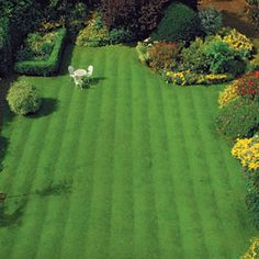 Troubleshoot Your Turf Surefire solutions that'll turn a thin, patchy, or weedy lawn into a barefoot-worthy expanse of green