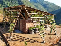 Low-cost bamboo restroom in Vietnam is completely covered in leafy foliage