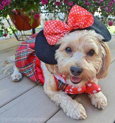 Happy 88th Birthday Mickey Mouse! #HappyBirthdayMickey